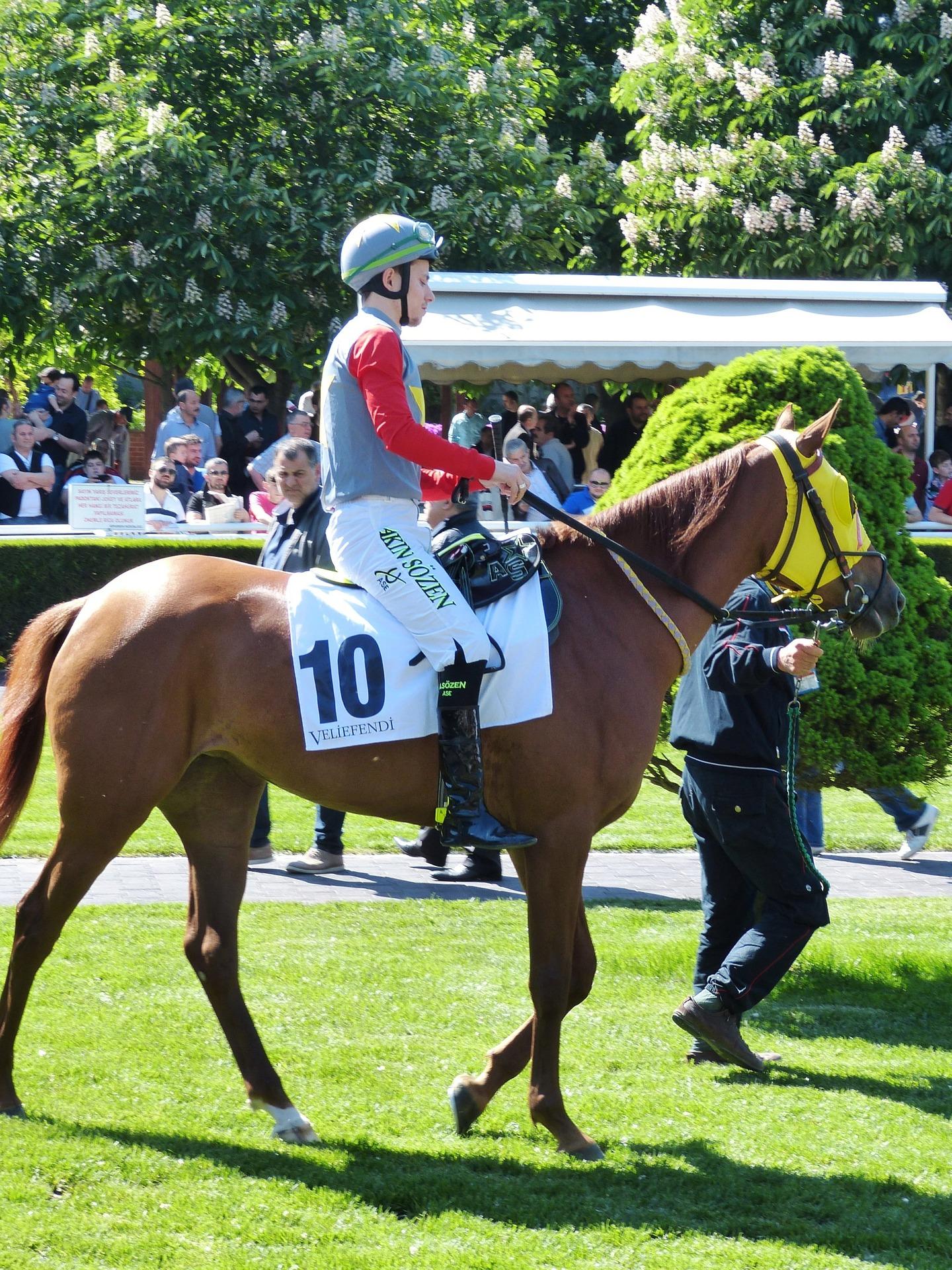horse-racing-784726_1920