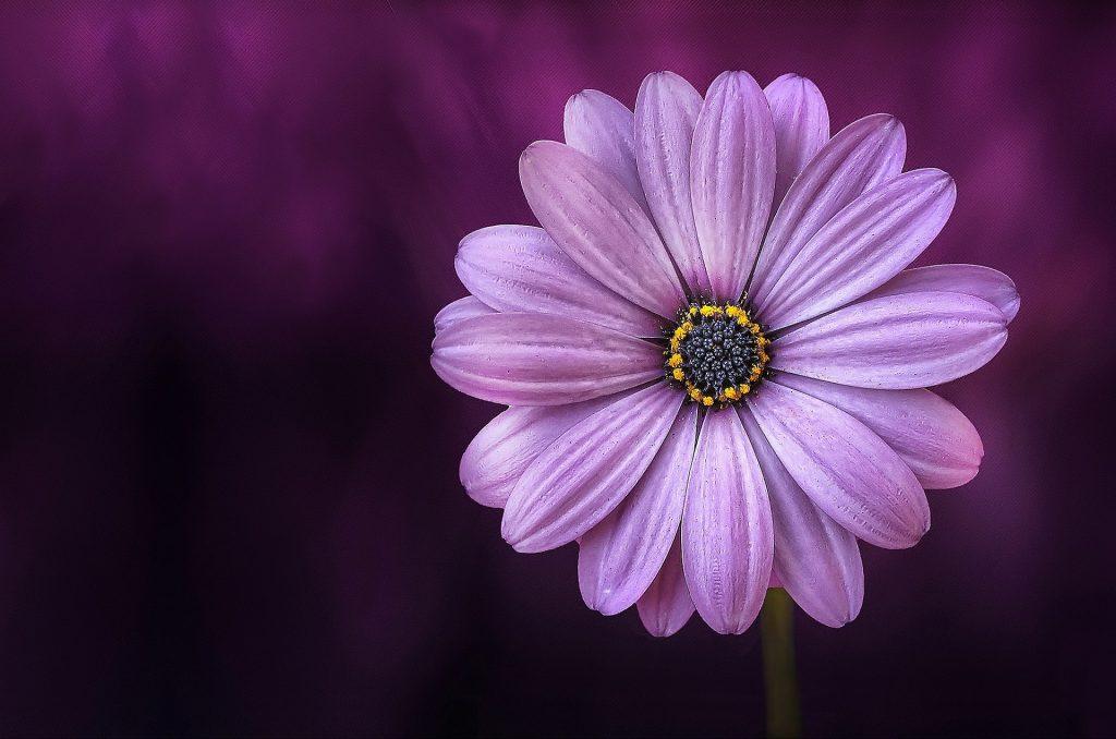flower, pcos