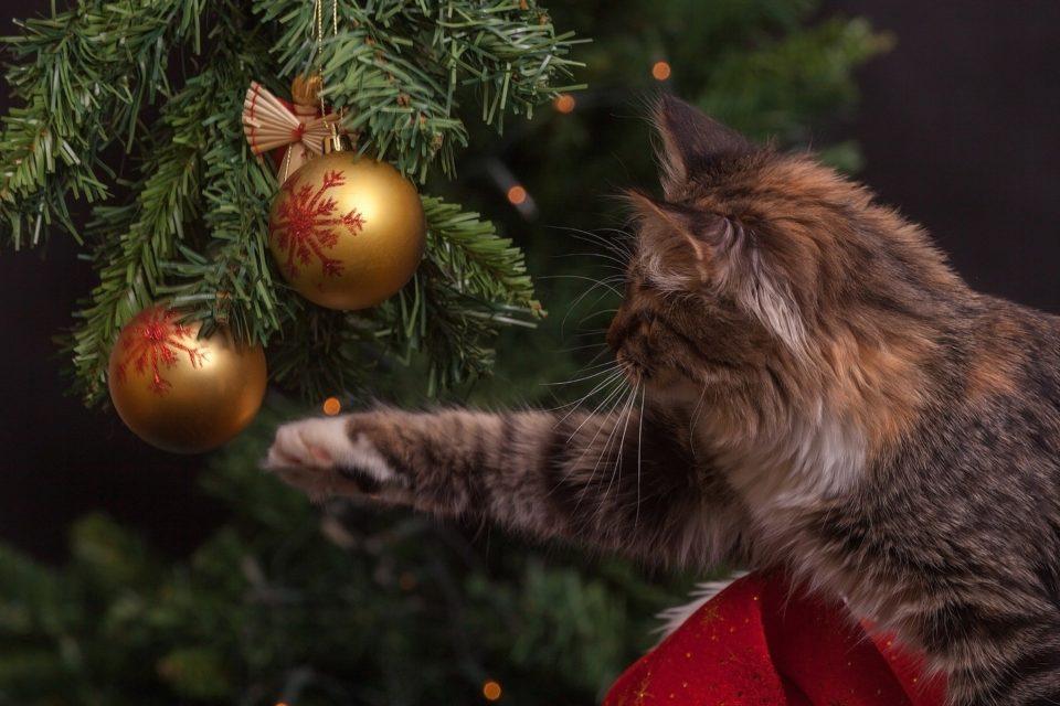 Furry Friend Christmas Ideas