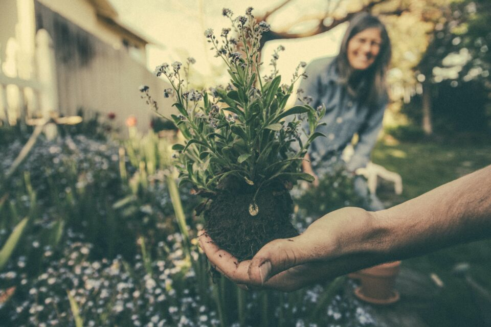 Gardening Can Help Improve Your Health