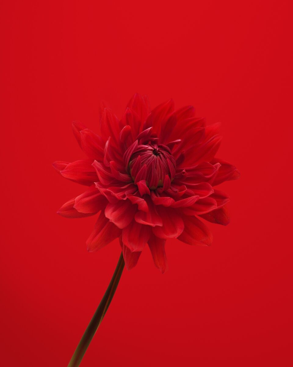 Life's Most Stressful Moments, red flower