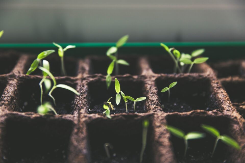 growth, grow, ready to grow in 2021, plant